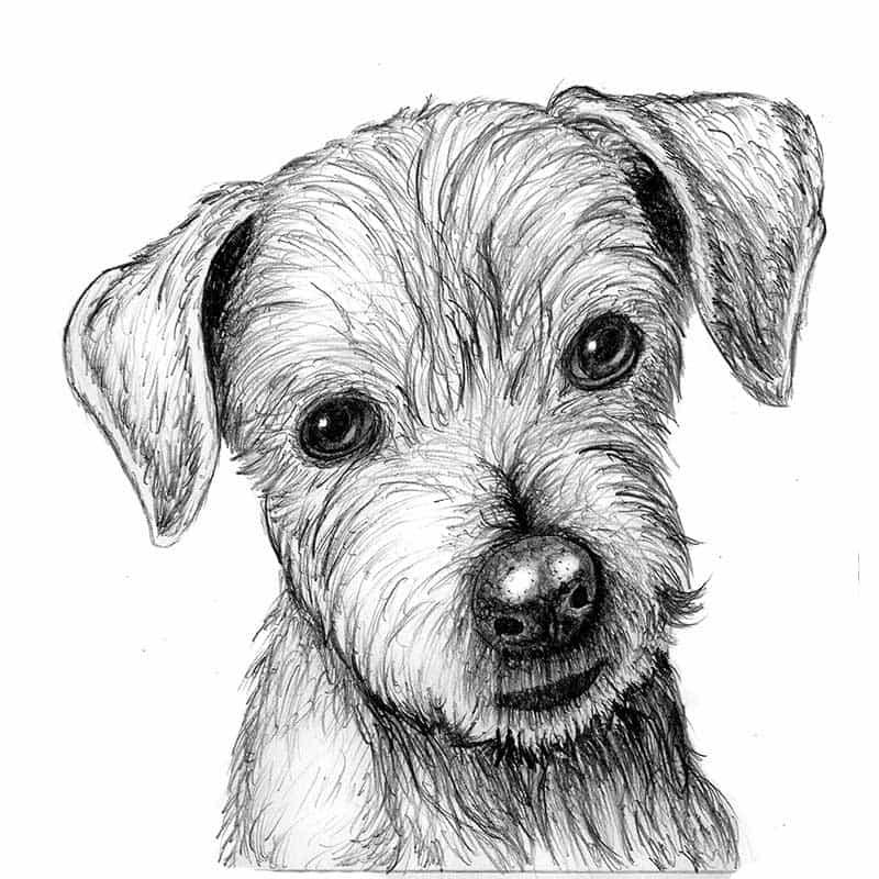 сопровождала картинки собак чтобы нарисовать собаку фотографий